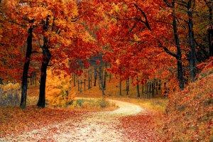 Fruška gora u jesen